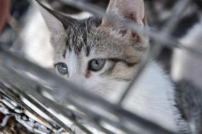 doação de animais na zoonoses