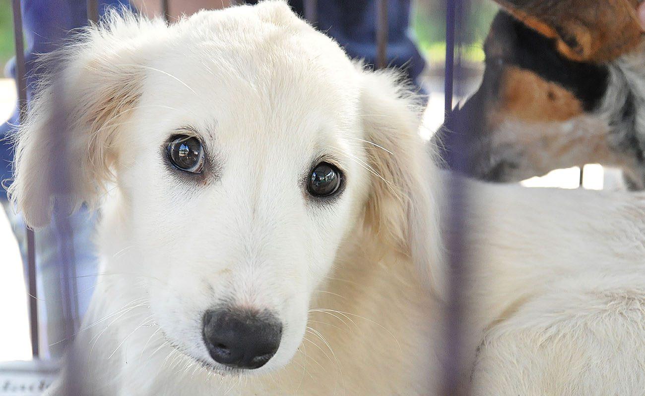 cachorro adoção animais